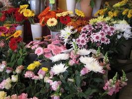 Schnittblumen, Blumengeschäft Blumenbiene Berlin, Floristik Berlin