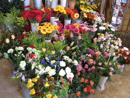 Blumengeschäft Blumenbiene Berlin, Floristik Berlin, Schnittblumen