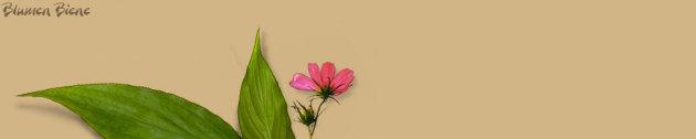 Blumenbiene, Blumenbiene Berlin, Schnitttblumen